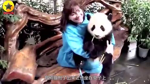 熊猫与游客合影一脸高冷,当来了一位美女后,熊猫表现惹人笑