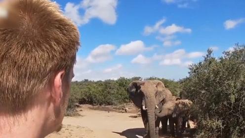 现场!摄影师偷拍大象被发现 被象群围住6分钟 用这一妙招逃脱