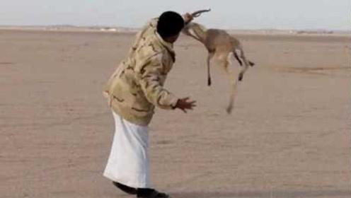 真会玩!主人故意放羚羊逃生,随后让几十条猎犬追,结果会怎样?
