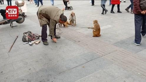 """耍猴人将猴子大便带走 """"在哪里都要把卫生搞好"""""""