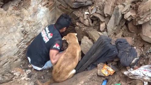 狗狗墙根刨土爪子出血,路人好奇走近,下一秒被感动到了