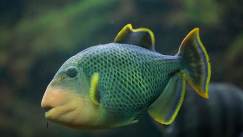 海洋里最危险的动物是什么?说出来你可能不信