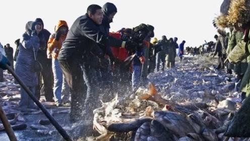 为什么查干湖的鱼越捞越多?渔民愤怒:看看这群人都干了什么!