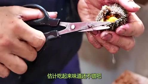 580元一只的日本大海胆,大厨是如何处理的?看完涨知识了!