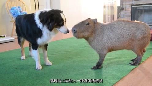 所有孤独的小动物都向往和她相遇,抚平所有伤痛的心,她总有这个能力