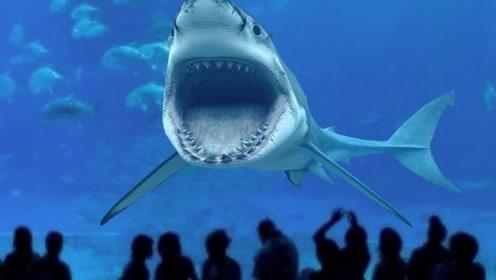 为什么世界上任何一座海洋馆里,都没有大白鲨,养了会怎样?