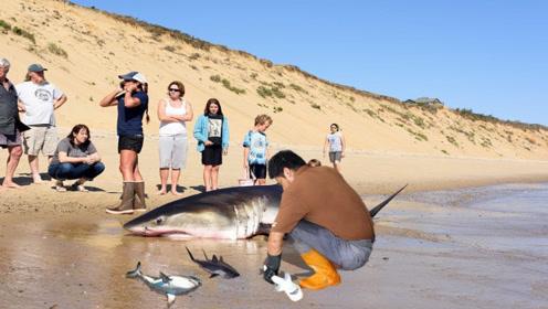 一条鲨鱼惨死在沙滩,男子走近一看,却发现了不对劲