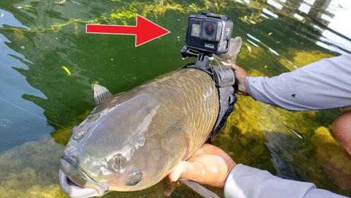 把摄像头绑在鱼身上,会拍出什么画面?眼前情形让人意想不到!