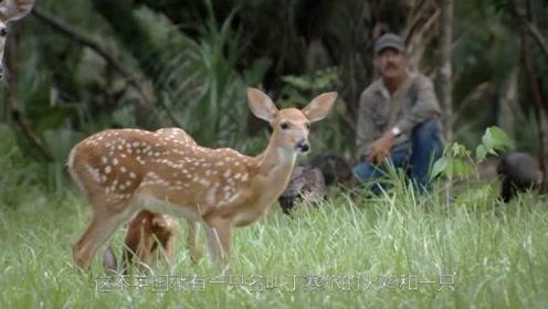 跨物种的爱情!小鹿和火鸡成为了一对神仙眷侣