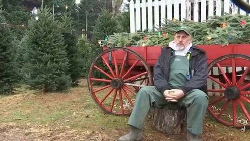 气候干燥、树农越来越少!今年美国圣诞树短缺