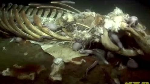 深海,这里的生物个个面目狰狞好可怕!
