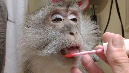 """美女给猴子化妆,结果居然比自己""""漂亮""""!网友:乡村贵妇!"""