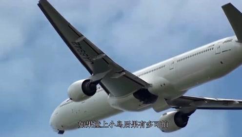 正在飞行的飞机撞上小鸟,后果有多可怕?看后大开眼界