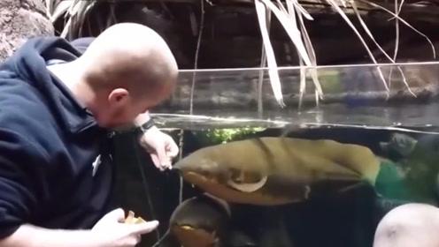 一条鱼离开水5年,依旧还能存活?放入水中的那一刻我信了