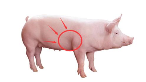 """猪身上最脏的""""一处肉"""",不是大肠而是""""它"""",吃多了对身体伤害大"""