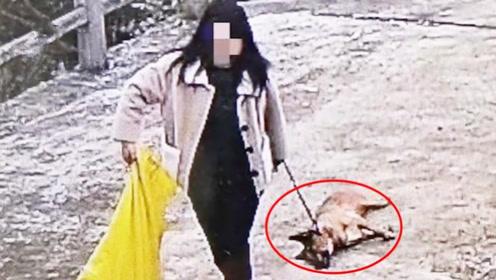 两女子想吃狗肉,打死他人小狗之后拖着就跑,盗狗监控曝光
