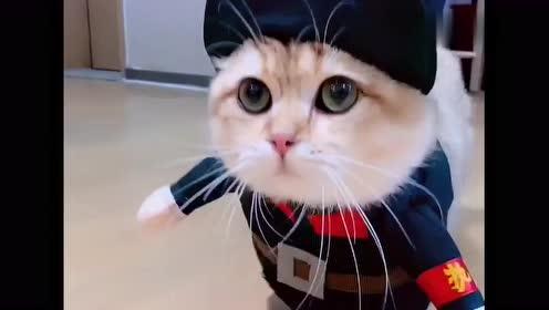 给乖巧的小猫咪换上衣服,呆呆萌萌的样子,真是太逗了