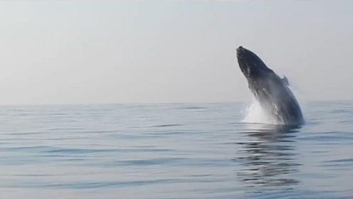 """科学家研究水质时,拍下会""""飞""""的海洋生物,网友:大惊小怪"""