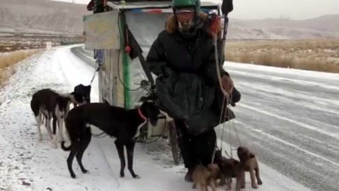 男子辞职后带8条狗徒步青藏线,环境恶劣被网友可怜打赏