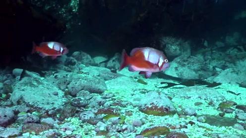 奇幻的海洋世界包罗万象!看尽海洋生物多姿的百态生活!