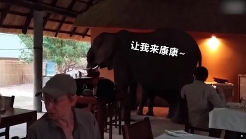 """大象闯入露天餐厅吃""""霸王餐"""" 象鼻伸来伸去食客傻眼场面滑稽"""