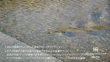 Megabass渔拓中国总代理——I-JACK米诺泳形