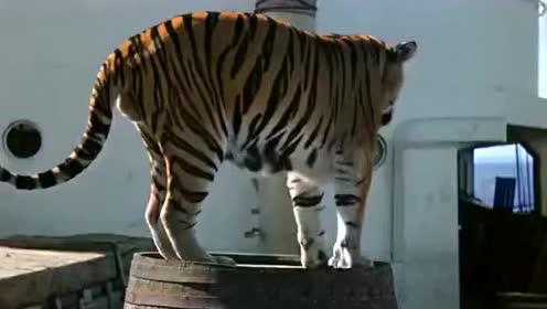 《运虎记》船上的老虎狮子跑出了笼子,而船员却跑进笼子保命!