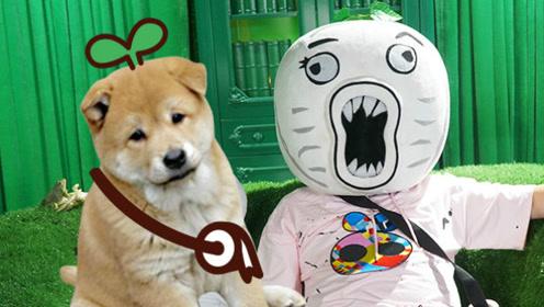 萌宠也迷二次元,狗狗开口嚎叫就知道是模仿的谁!