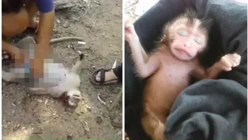 怀孕母猴遇车祸死亡 女孩现场救出猴宝宝