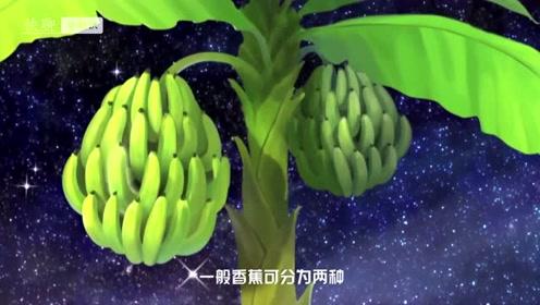 香蕉可以治疗便秘,但不是每类香蕉都可以治疗便秘