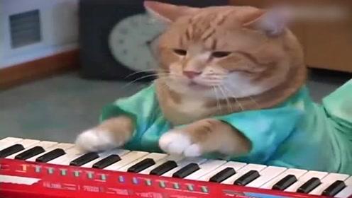 一只怀揣音乐梦想的喵星人,嗯,一本正经的样子,我信了你了