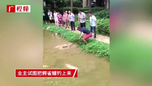 """小区人工湖惊现长1.4米""""水怪"""" 成千上万锦鲤被团灭"""