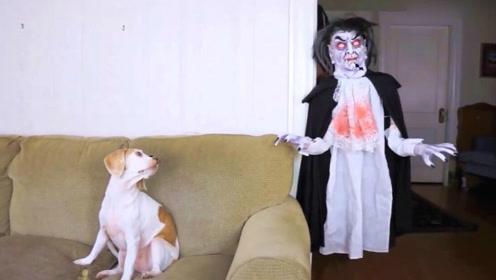 狗狗遇到丧尸的反应,哈哈太逗了!