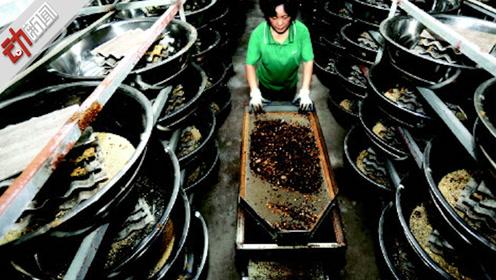 """3亿只蟑螂一天吃15吨餐厨垃圾!动画揭""""小强""""新用途"""