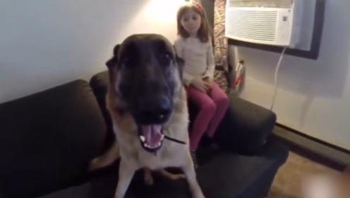 当宝宝遇到危险,狗狗冲前面,接下来的举动萌爆了!