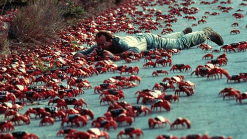 复活岛上的红蟹