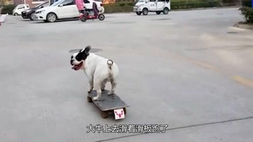 主人和狗一起学滑板,结果狗先学会了,网友:太搞笑了
