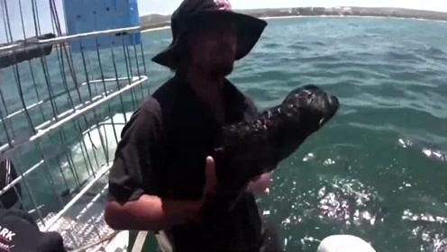 失散小海豹被放归大海 心怀感恩竟重新游回来