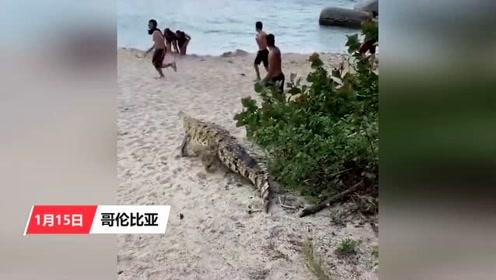 恐怖!海滩上突然蹦出条鳄鱼 吓得游客尖叫逃窜