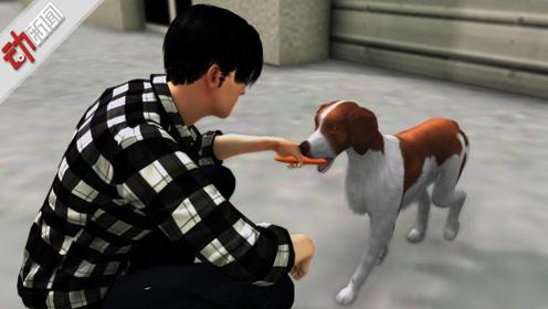 """男子""""捡狗""""涉嫌盗窃被拘?狗主人称他早有预谋 警方:正核查"""