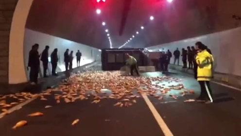 运鱼货车高速隧道内翻车 6000多斤锦鲤躺地乱跳