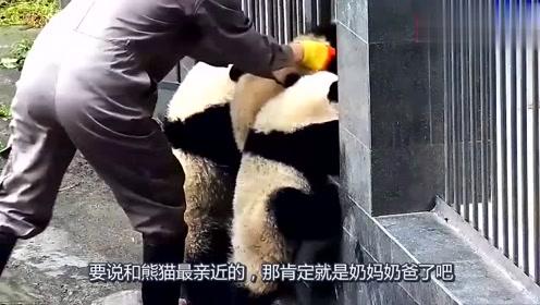 熊猫宝宝想要奶爸抱,奶爸总是视而不见,熊猫:你不爱我了吗