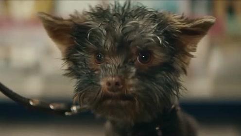 荷兰彩票温馨广告,狗狗也玩起了离家出走