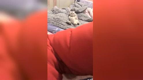 你看我现在有猫样了吗?太可爱了,真是成精了