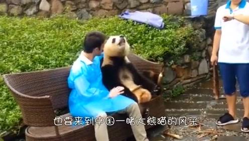 熊团子趁饲养员不在,集体越狱,眼看就要成了,谁知队友不给力啊(1)