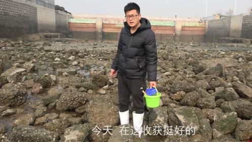 小伙赶海抠海蛎子,没想到在这片石头下面捡到了这么多海螺!