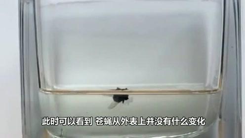 硫酸多危险?苍蝇的结果就是最好的证明!