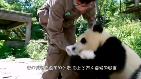 明明可以靠颜值吃饭的大熊猫,却要凭本事,作品卖到上千元!
