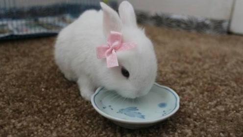 兔子一喝水,就会肠断身亡?听饲养员一番解释:庆幸自己早知道!