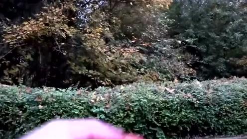 大叔真会玩!用棒球棍敲打西红柿,现实版的水果忍者,你能做到吗?